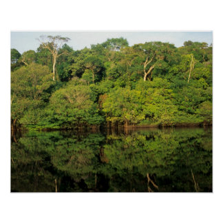 Anavilhanas, Amazonas, Brazil. Rainforest river Posters