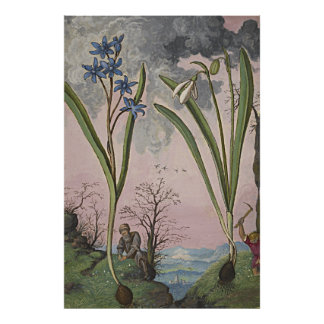Ancient Botanical Art Snowdrop Poster
