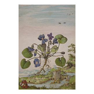 Ancient Botanical Art Viola Poster
