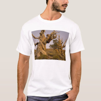 Ancient Bristlecone Forest, White Mountains, CA T-Shirt