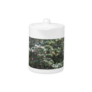 Ancient cultivar of Camellia japonica flower