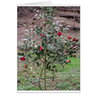 Ancient cultivar of Camellia japonica flower Card