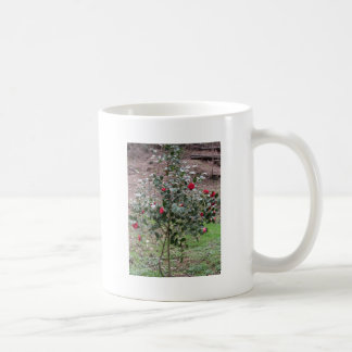 Ancient cultivar of Camellia japonica flower Coffee Mug