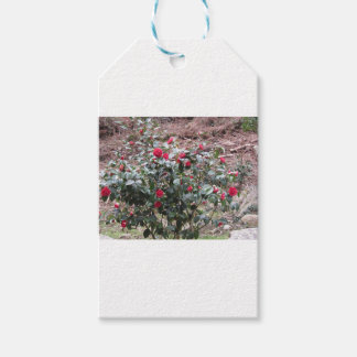 Ancient cultivar of Camellia japonica flower Gift Tags