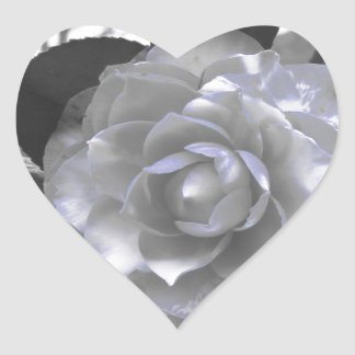 Ancient cultivar of Camellia japonica flower Heart Sticker