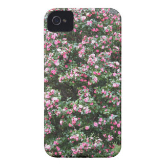 Ancient cultivar of Camellia japonica flower iPhone 4 Covers