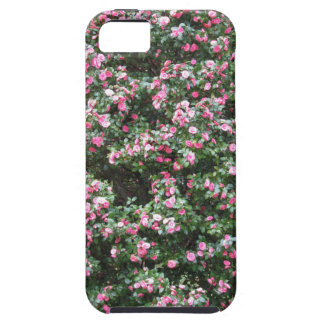 Ancient cultivar of Camellia japonica flower iPhone 5 Covers