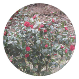 Ancient cultivar of Camellia japonica flower Party Plates