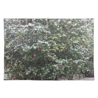 Ancient cultivar of Camellia japonica flower Placemat