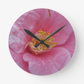 Ancient cultivar of Camellia japonica flower Round Clock