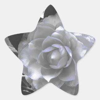 Ancient cultivar of Camellia japonica flower Star Sticker