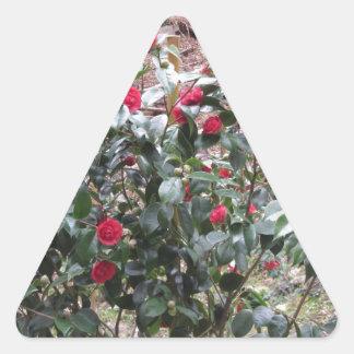 Ancient cultivar of Camellia japonica flower Triangle Sticker