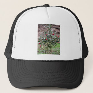 Ancient cultivar of Camellia japonica flower Trucker Hat