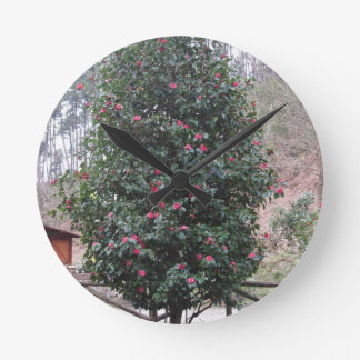 Ancient japanese cultivar of Camellia japonica Round Clock