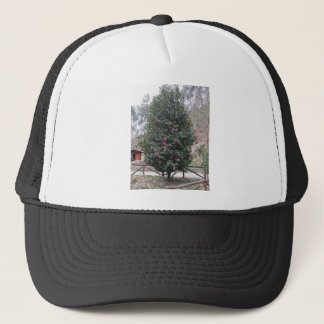 Ancient japanese cultivar of Camellia japonica Trucker Hat