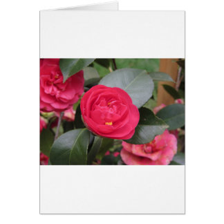 Ancient japanese cultivar of red Camellia japonica Card