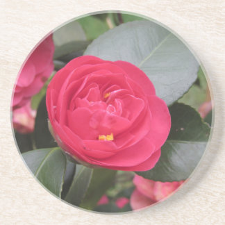 Ancient japanese cultivar of red Camellia japonica Coaster