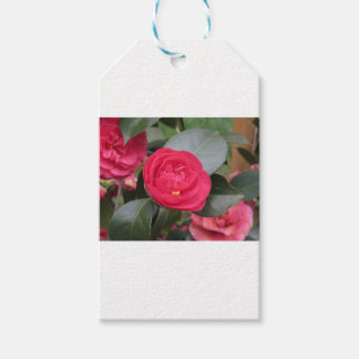 Ancient japanese cultivar of red Camellia japonica Gift Tags