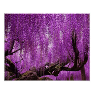 Ancient Wisteria Purple Lavender Flowers poster