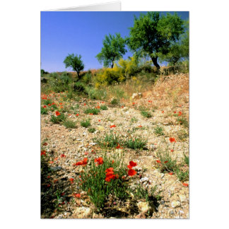 Andalucian landcape with poppies. card
