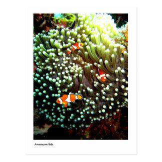 Anemone fish postcard