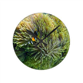 anemone fish wallclocks