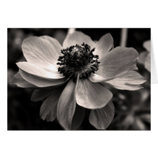 Anemone Floral Photography Sympathy Thank You card