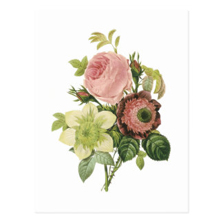 anemone rose clematis by Redouté Post Cards