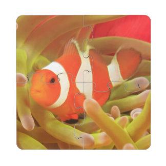 anemonefish on giant indo pacific sea anemone, puzzle coaster