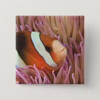 anemonefish, Scuba Diving at Tukang 2 2 Inch Square Button