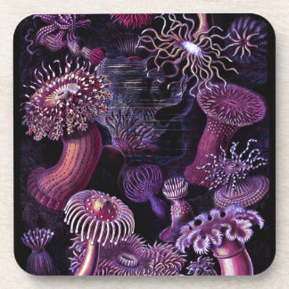 Anemones in Dark Purple Drink Coaster