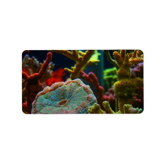 anenome saltwater image coral aquarium tank