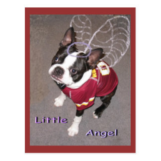Angel Boston Terrior Postcard