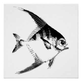 Angel Fish Perfect Poster
