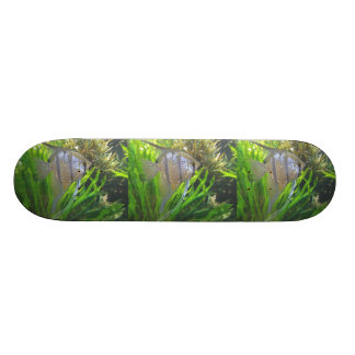 Angel Fish Custom Skate Board