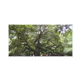 Angel Oak is 400 year old tree canvas print