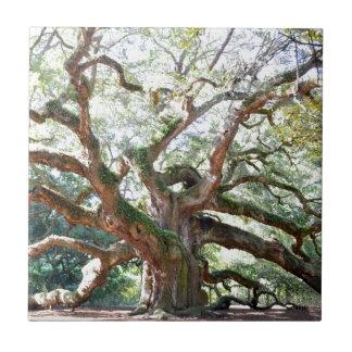 Angel Oak Tree Gifts Tile