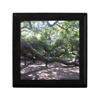 Angel Oak Tree Limbs Gift Box