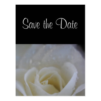 Angel rose save the date wedding announcement postcard