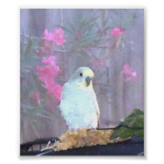 Angel the Budgie Poster
