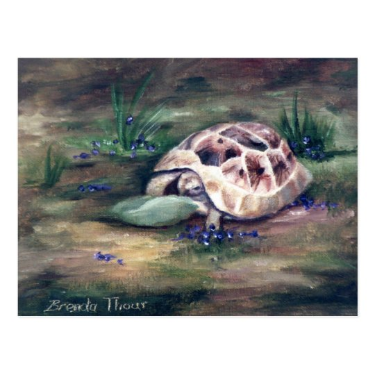 Angel Tortoise Postcard