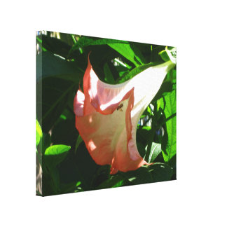 Angel Trumpet Flower Canvas Print