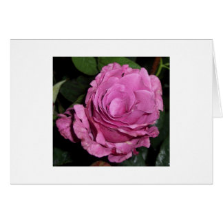 Angelface Rose Greeting Card
