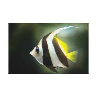 Angelfish Canvas Print