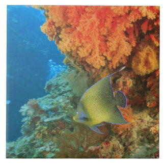 Angelfish swimming near orange soft coral, Bligh Tile