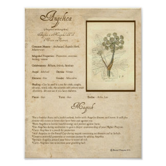 ANGELICA MAGICK HERB POSTER