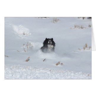 Angelo The Border Collie Dashing Through The Snow Card