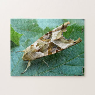 Angle Shades Moth Photo Puzzle with Gift Box
