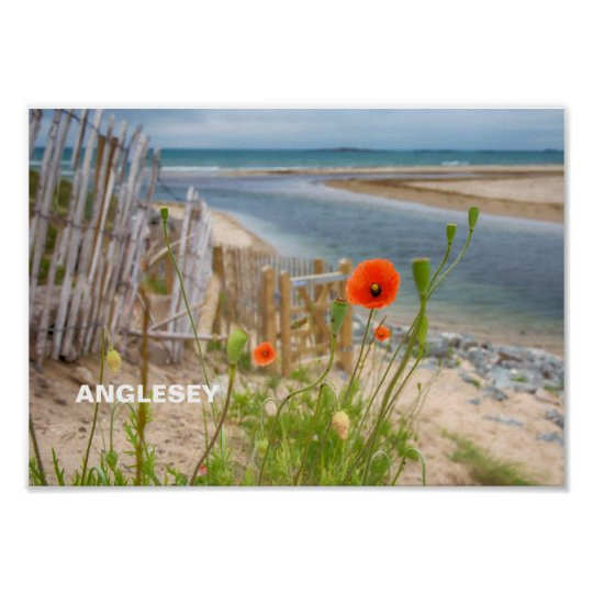 Anglesey Wales Scenic View Beach And Wild Poppies Poster