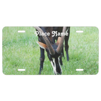 Angola Sable Antelope License Plate